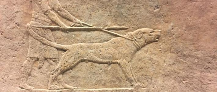 bas-relief-assyrien-chien